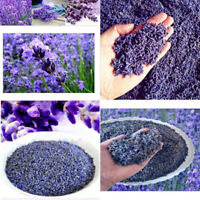 Bulk Natural Strong Purple Dried Lavendar Buds Bulk Lavender Flower Blooms Gift