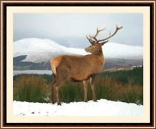 Stag In The Snow, New & Exclusive Cross Stitch Kit