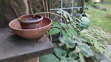 2 yr old Japanese Wisteria Plant Bonsai Tree
