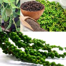 Pure Ceylon, 50 Black Pepper Seeds, Piper nigrum,100% Organic High Quality