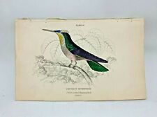 1st Ed Hand-colored Jardine's Natural History 1834 Violet-crown Hummingbird - 12