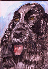 """ENGLISH COCKER SPANIEL"" by Ruth Freeman  ACRYLIC  ON CANVAS BOARD 5"" X 7"""