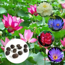 10Pcs Bonsai Lotus Water Lily Flower Bowl Pond Fresh Seeds Lotus