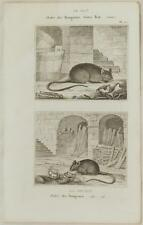 BUFFON ORIGINALE 1850 TOPO MOUSE MICE RAT SOURIS ANIMALS ZOOLOGIA 1850