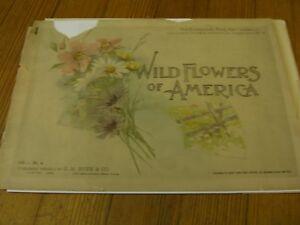 Wild Flowers of America,Vol.1/ #4 - 1894 - Botanical Fine Art Weekly /Antique