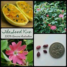 20+ ORGANIC BANANA PASSIONFRUIT SEEDS (Passiflora mollissima) Vine Edible Flower