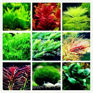 Graines mix plantes pour aquarium décor - seeds - semillas - bulk aquarium grass
