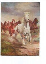 POSTCARD HORSE , CHEVAUX PAR A. SCHELOUMOFF