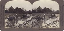 Philippines Agriculteurs Photo Stereo Stereoview Vintage argentique