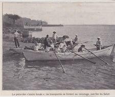 1909  --  BAGNE GUYANE  CANOTAGE FORCE AUX ILES DU SALUT   3E856