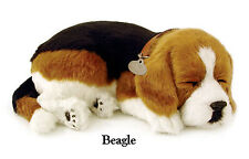 Perfect Petzzz ® - sleeping pet respiration Jouet -  Chien - BEAGLE