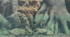 "Vivarium / Aquarium TREE TRUNK Background 12"" Tall Poster Fish Tank Picture viv"