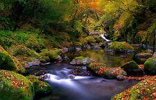 Enmarcado impresión otoño Creek corriendo por el bosque (imagen bosque de arte cartel