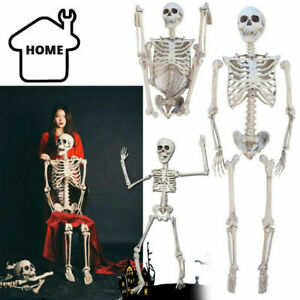 170cm Halloween Poseable Human Skeleton Full Life Size Party Decoration