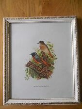 Framed Bird Print  -  a Pair of Red Start by Tom Banks