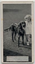 Irish Setter Dog With Young Child 1930s Ad Trade Card