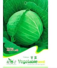 FD1344 Cabbage Seed Brassica Oleracea Organic Vegetable ~1 Pack 50 Seeds~
