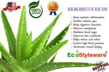 1/2 Lbs(8 Oz) FRESH ALOE VERA Leaf, Barbadensis Miller,Fresh Cut - FREE Shipping