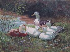 A Duchemin peinture.   A Duchemin painting aquarelle début 20èmes canard duck