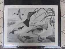 Original  1930 Rex Brasher #147 Hand Painted Bird Print Canvasback  #147REX2 DSS