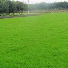 300 lots perennials garden grass seeds Evergreen Lawn Seed