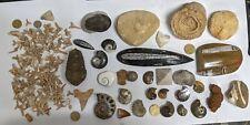 HUGE FOSSIL COLLECTION Shark Dinosaur Trilobite Ammonite Stromatolite etc (U172)