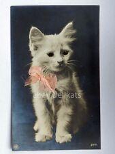 GATTO CAT Katze occhi luminosi vecchia cartolina