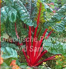 Acelga ROJO MAGENA SUNSET sano Verdura fina Rojo 50 Semillas frescas Balcón