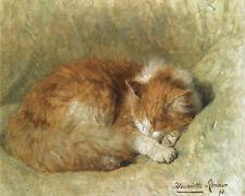 A Sleeping Cat Henriette Ronner Knip   24'  CANVAS