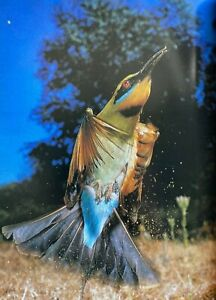 1980 1st Masterpieces of Australian Bird Photography, Peter Slater FREE EXPR AUS
