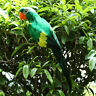 Large Artificial Parrot Bird Realistic Home Decor Budgie Taxidermy Green