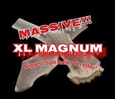 XL MAGNUM SPLIT! New Size, Nothing Bigger On eBay!