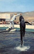 Pilot Whale, Marineland of the Pacific Oceanarium, Palos Verdes c1960s Postcard