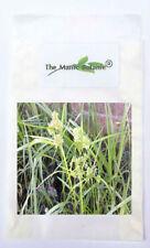 Cyperus eragrostis - Pale Galingale - 100+ Seed - Pond Marginal Aquatic Plant