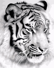 """16X20""""Paint By Number Kit DIY Painting On Canvas-Tiger Black White Art 1960"""