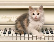 METAL MAGNET Calico Kitten Piano Musical Instrument Cat Kittens Cats MAGNET