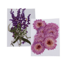 20 Pieces Pressed Dried Real Flowers Purple Flower Flowers for Art Crafts