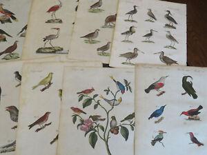 Birds  -  Bertuch , Natural History Engravings, Germany ca: 1798, 8 plates