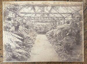 Antique Photo Fern House Botanic Gardens Ballarat by Fred Kruger c1880 Victoria