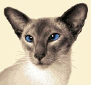 SIAMESE CAT, KITTEN - Full counted cross stitch kit *Jann Designs