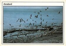 BT4742 Ameland birds oisseaux Netherlands