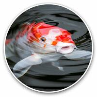 "Koi Carp Fish Pond Japanese Small Photograph 6/"" x 4/"" Art Print Photo Gift #16427"