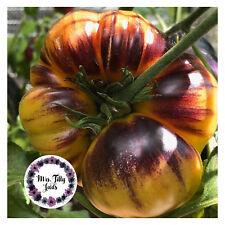Purple Sunrise Tomatensamen Alte Sorte Samen Tomate sehr selten robust Schönheit