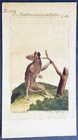 1774 Comte de Buffon Antique Quadraped Print of Female Marsupial Possum