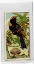 (Jb2615-100)  WILLS AUS VR,BIRDS OF AUSTRALASIA,REGENT BOWER BIRD,1912 #23