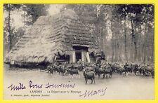 cpa Dos 1900 CHEVRIER LANDAIS Grange Chaume DÉPART pour le PATURAGE Chèvres Goat