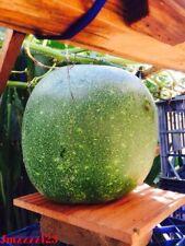 10 Winter Melon, White Gourd, Wax Gourd Seeds