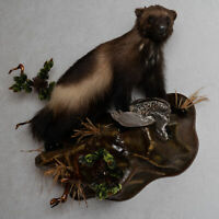 WOLVERINE WITH HAZEL GROUSE TAXIDERMY MOUNT - MOUNTED, STUFFED ANIMALS FOR SALE