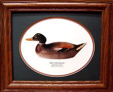 Mason Drake Mallard Premier Grade Duck Decoy Photo Vintage Giclee Reproduction!