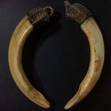 Real Solid 2 Spike Wild Boar Pig Teeth Luck Pendant Thai Amulet swine Powerful